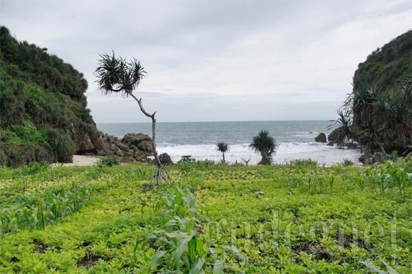 Pantai Kayu Arum