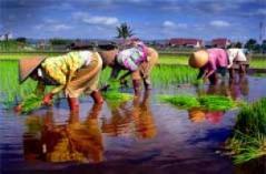Desa Wisata Kelor Yogyakarta