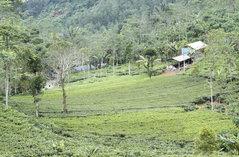 Tanah Misi