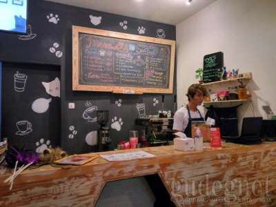 Cats and Coffee Jogja