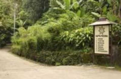Desa Wisata Pentingsari Yogyakarta