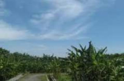 Kebun Plasma Nutfah Pisang Yogyakarta