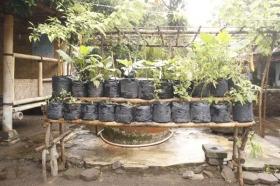Tanaman di kebun