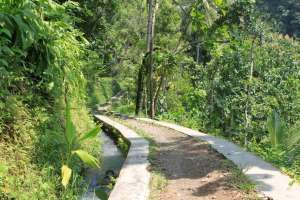 Jalan setapak menuju Curug Sidoharjo