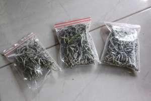 Teh putih yang diambil dari pucuk tanaman teh yang masih muda