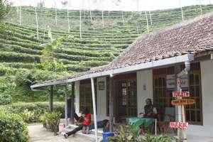 Lokasi peristirahatan yang terletak di bawah kebun teh