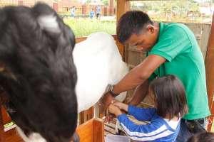Aktivitas memerah susu