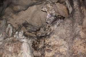 Batuan stalaktit yang dipercaya mirip kepala naga