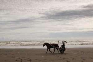 Dokar atau andong sebagai sarana transportasi di pantai Parangendog