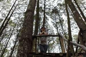 Hutan pinus jadi objek wisata lamunan paling mengesankan