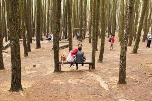 Di hutan pinus, romantisme itu bisa dilakukan secara murah meriah