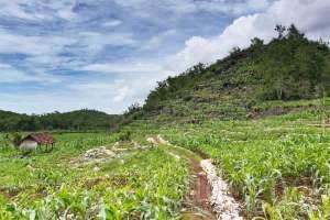 Lokasi pantai Kayu Arum ada di balik bukit