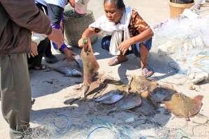 Nelayan menjual ikan pari di Pantai Sadeng