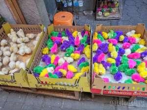 salah satu penjual anak ayam di pasar PASTY