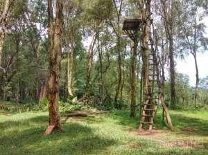 Rumah Pohon di Bukit Lintang Sewu