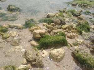 Beningnya air sehingga lumut bisa terlihat di Pantai Sundak 2018