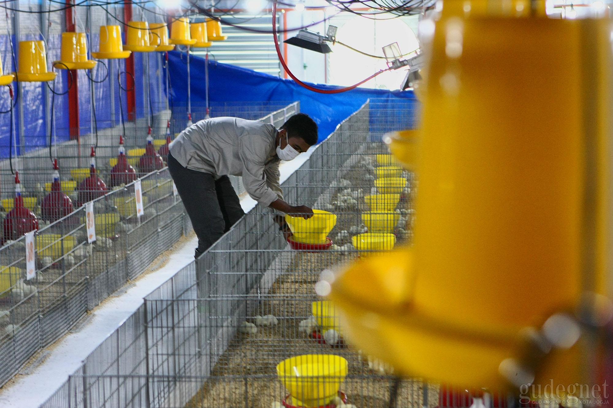 Research Farm, Permudah Mahasiswa Fakultas Peternakan UGM Lakukan Riset
