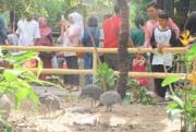 Taman Burung Raksasa di Gembiraloka