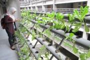 Eco Green Living Jawaban Hunian Masa Kini