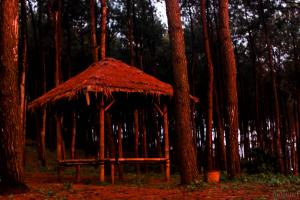 Hutan Pinus Pengger, Alternatif Baru Wisata Hutan Pinus di Jogja