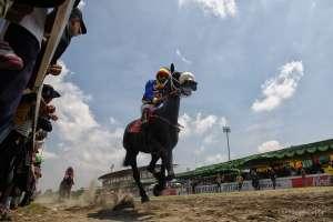 130 Kuda Bersaing Ketat pada Kejuaran Paku Alam Cup VII