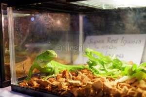 'Pet Expo', Kucing Hingga Iguana Kumpul di SCH
