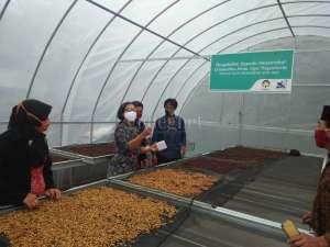 Tim Pengabdian UAJY Bantu Petani Kopi di Cangkringan