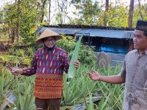 Panen Raya di Kalisuci, Sutrisna Wibawa Rintis Kebun ''Cerdas Air''