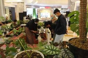 Malioboro Mall Pamerkan Aneka Tanaman Hias dalam 'House Plants Expo #2'
