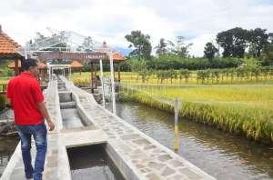 Kampung Mina Padi, Wisata Seru dan Edukatif